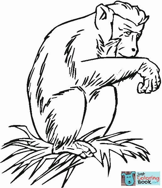 Pygmy Chimpanzee Bonobo Coloring Page Adult Coloring Animals