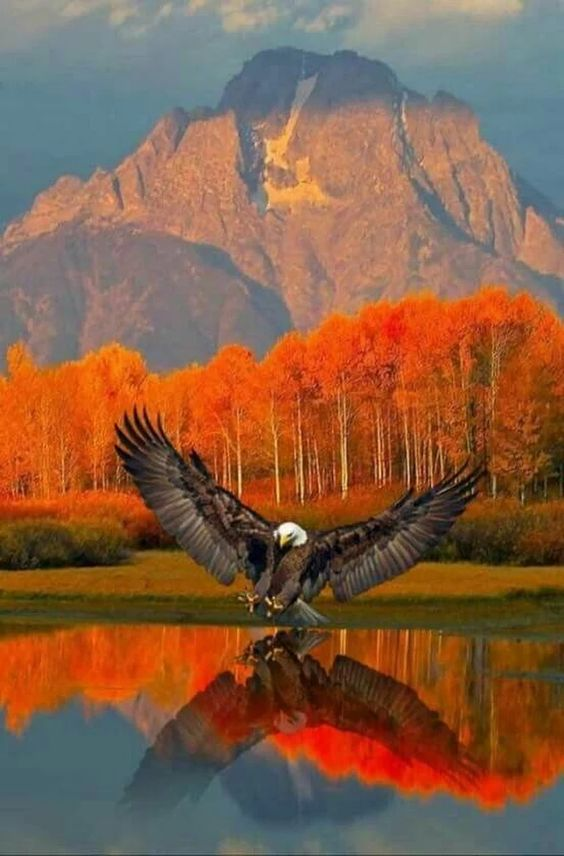Eagle - Beautiful reflection on the water w/the scenery.