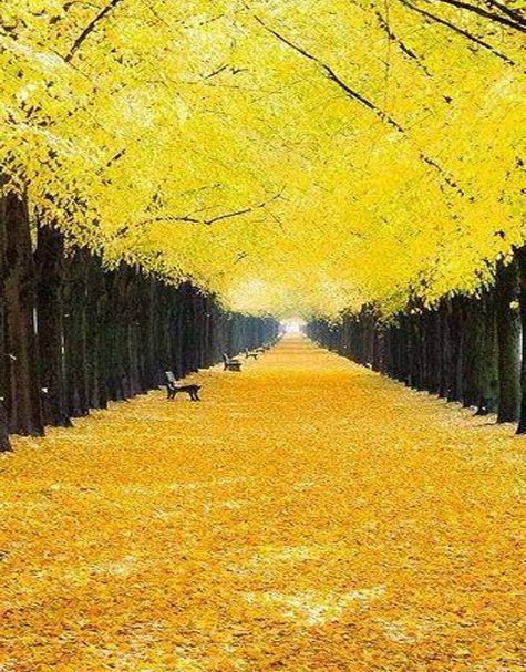The Georgengarten in Hannover, Germany.