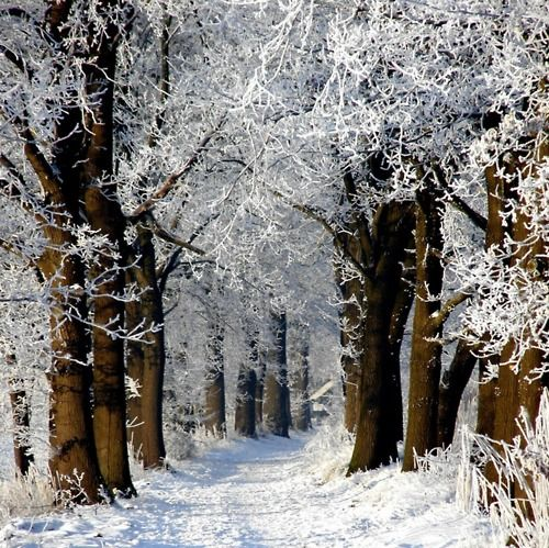 Shining forest path