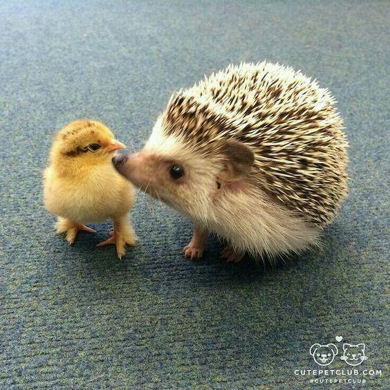Beyond adorable ❤️💕
