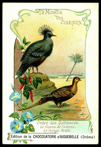 French Tradecard - Victoria Crowned Pigeon by cigcardpix, via Flickr