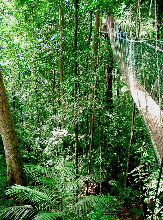 Balade dans la jungle au Taman Negara #malaisie #tamannegara