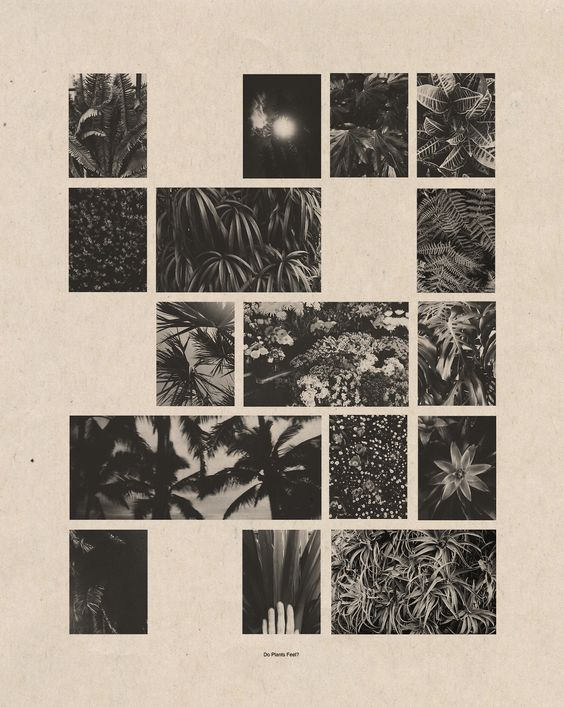 "cortneycassidy: "" Do Plants Feel? a non-linear story about plants """