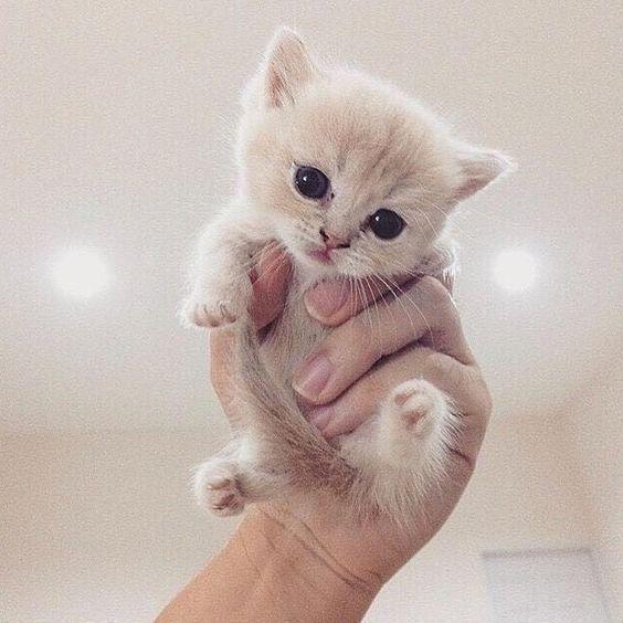 Cute Kitten Cat Animals Kittens Cutest Baby Cute Animals Cute Baby Animals