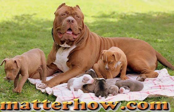 Are You In Search Of Finding A Perfect Dog Breed To Be Your Pet