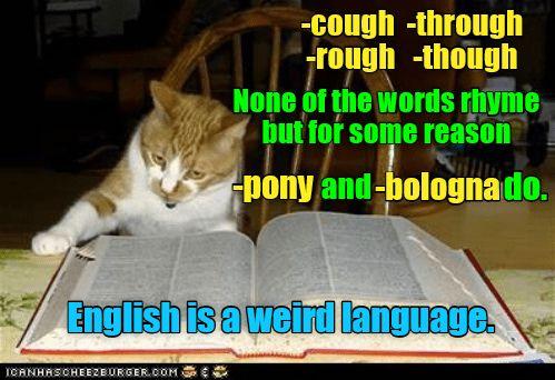 Makes You Wonder Http Cheezburger Com 9123250688 Funny Cat Memes Best Funny Jokes Cat Memes