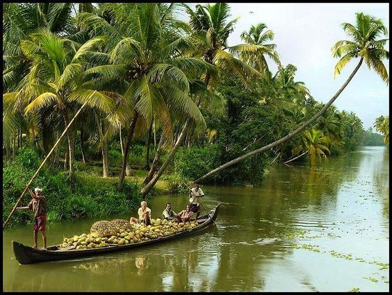Nature India And Kerala On Pinterest