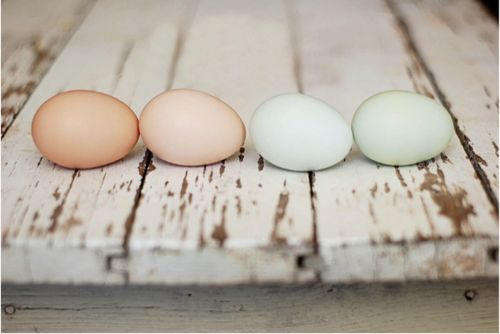 love these neutrals. But I love the turquoise eggs.