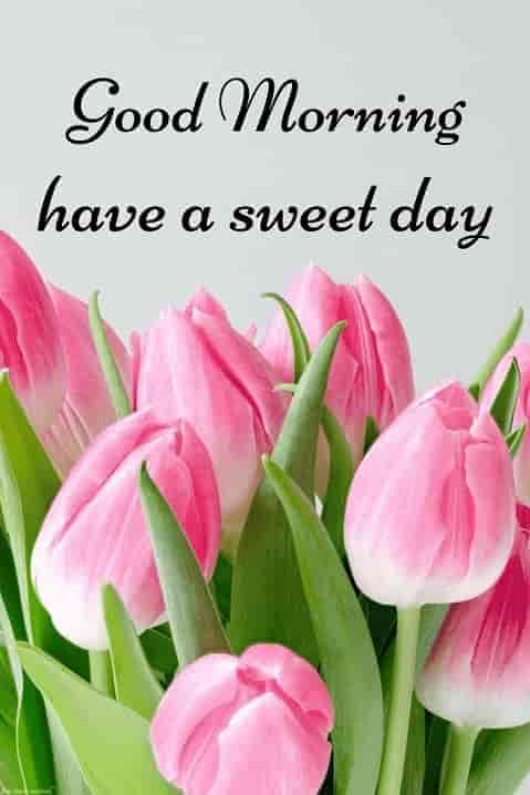 Sweet Good Morning Flower Image Good Morning Flowers Good Morning Cards Good Morning Roses
