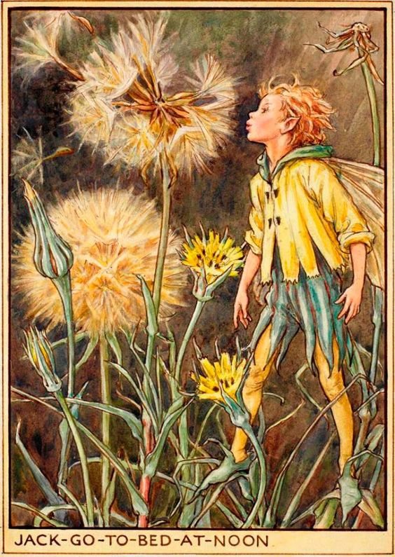 The Jack-Go-To-Bed-At-Noon Fairy, from Flower Fairies of the Wayside https://flowerfairies.com/jack-go-bed-noon-fairy/