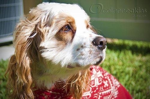 #Pet Photography