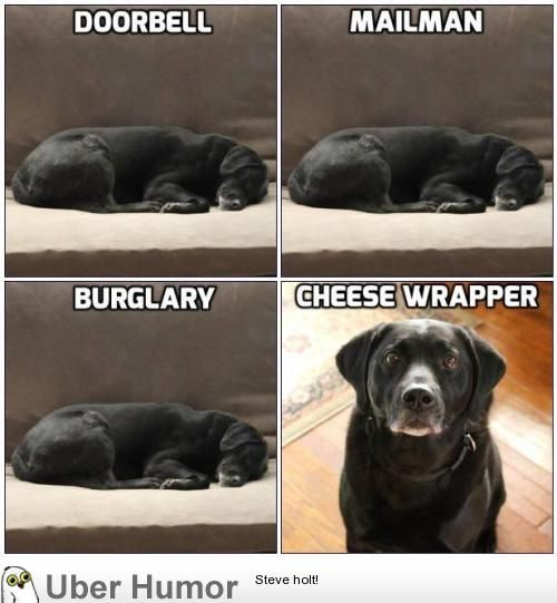 Pretty well sums up the security my dog provides | Funny Pictures, Quotes, Pics, Photos, Images. Videos of Really Very Cute animals.