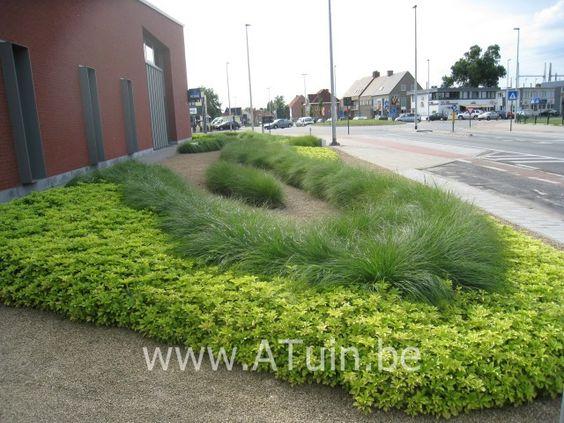Pachysandra Green Carpet Prijs - Carpet Vidalondon