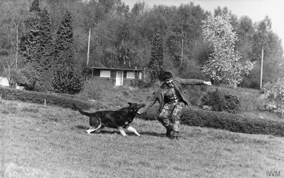 An SAS trainee goes through Dog Evasion techniques during the Combat Survival phase of 22 SAS selection.