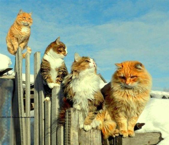 Cats & Kittens