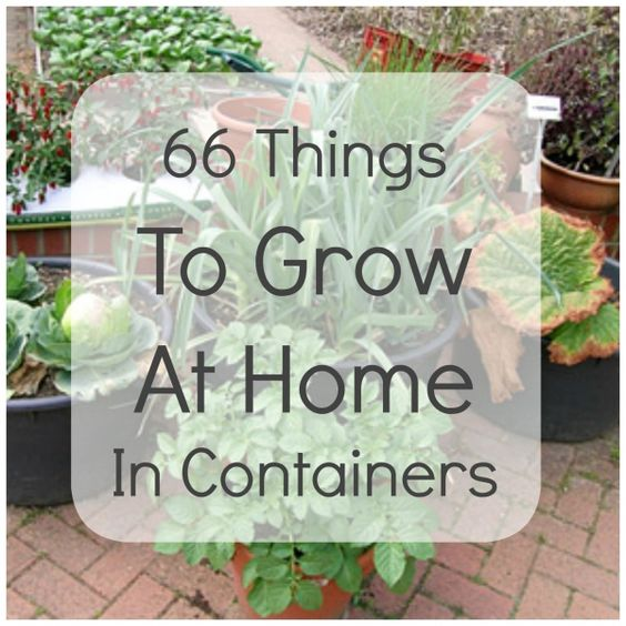 66 Things to Grow at Home in Containers