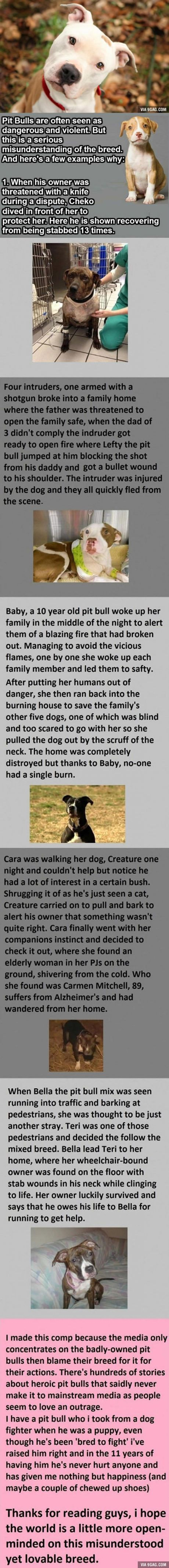 Why Pit Bulls Are Seriously Misunderstood