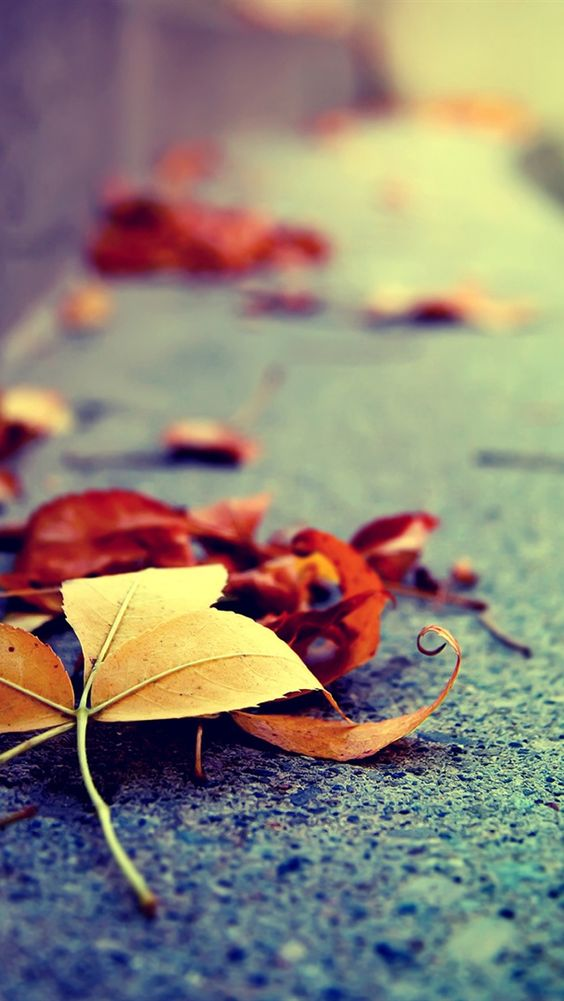 autumn fall iphone wallpaper background iphone
