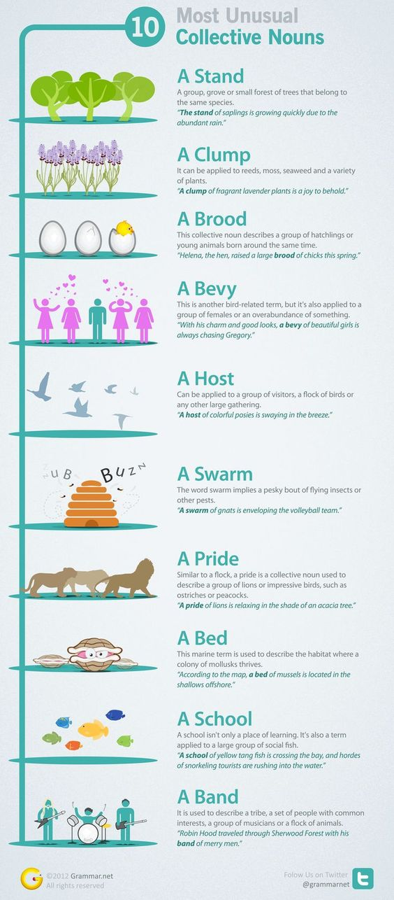 Collective Nouns Englishgrammar Learn English Collective