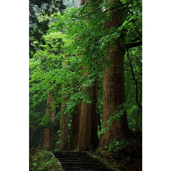 DSC_7821 ❤ liked on Polyvore featuring backgrounds, image, nature and pictures