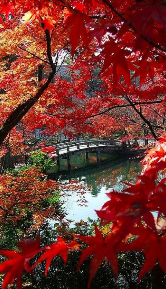 Autumn at the Aikan-do Temple Pond in Kyoto, Japan