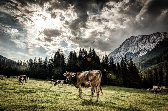 Joblog Tirol: Neue Fotos für die Agentur – Fotos für die Tourismus Branche …