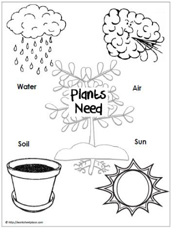 Plants Need Poster | Spring | Pinterest | Bilingual Education ...