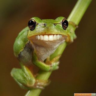 Green Smiley Frog: Gifts & Merchandise | Redbubble