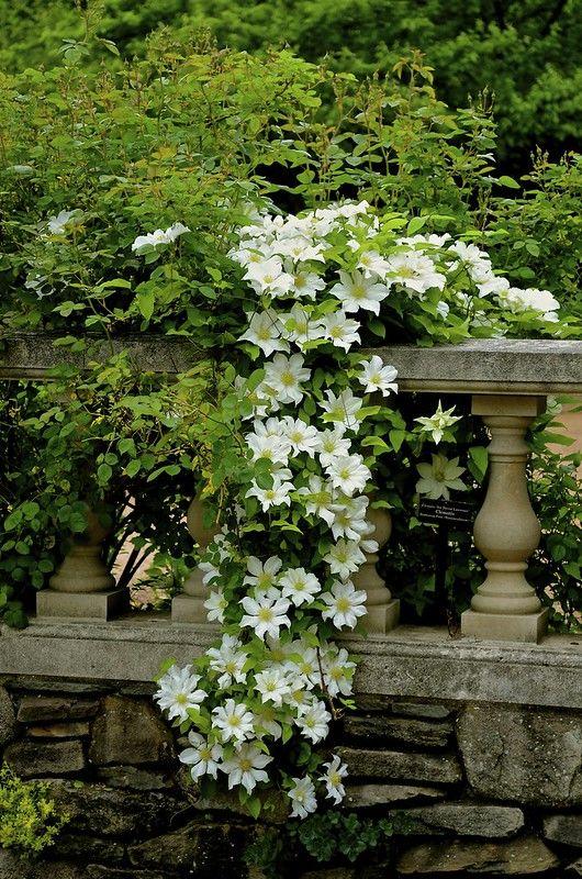 Fiori Bianchi A Cascata.Chicago Botanic Garden Flowers Giardino Giardinaggio E Idee