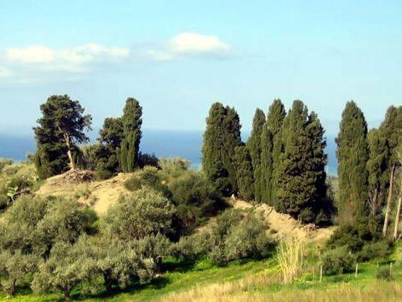 TINDARI HILL - unser Olivenhain - ein kleines Paradies...