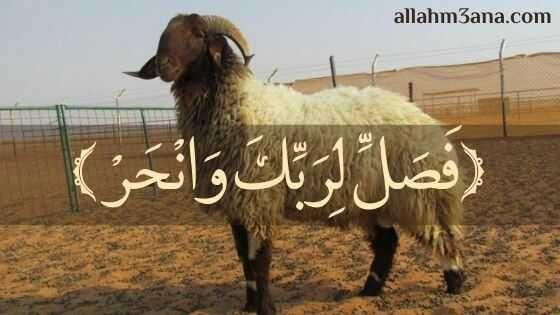 فضل الأضحية وأحكامها وشروطها بالأدلة الله معنا Allahm3ana Novelty Sign Animals Novelty
