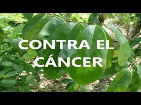 La Guanábana Cura 12 Tipos De Cáncer Cómo Curar El Cáncer De Mama Próstata Bazo Hígado Páncreas Youtube Tipos De Cancer Cancer De Mama Cáncer De Hígado