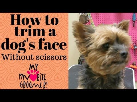 15 How To Trim A Dog S Face Without Scissors Youtube With