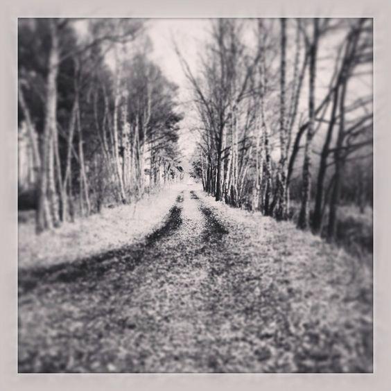 Der #Weg ist das #Ziel.  #Gifhorn #Natur