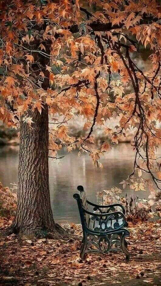 Bench Under Autumn Leaves Looks So Relaxing Autumn Scenery Beautiful Landscapes Nature Photography