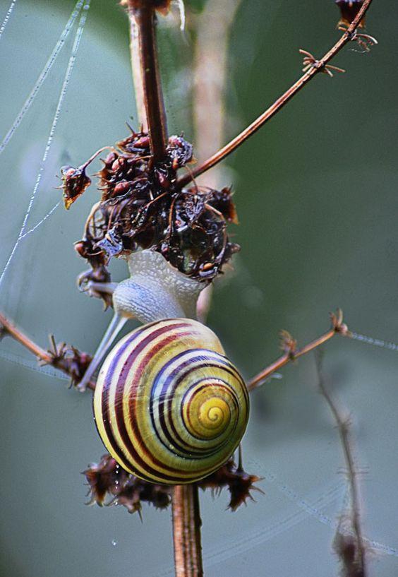#snail #schnecke