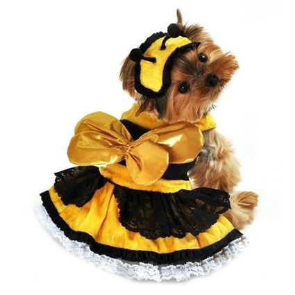 The honey bee costume for dogs is two-piece with metallic gold wings, a black floral lace dress and white lace petticoat.