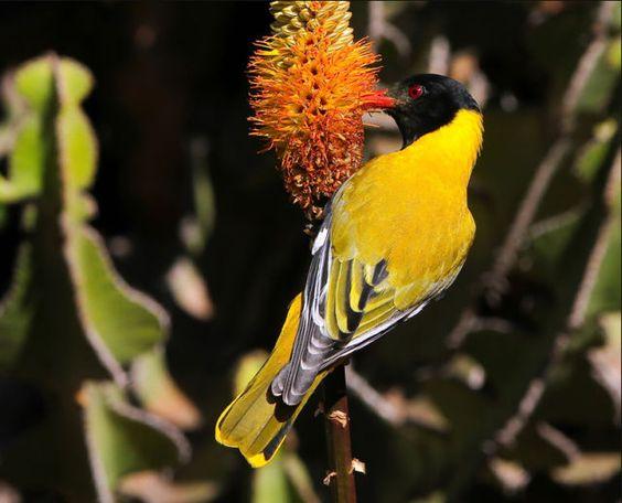 Beautiful Birds of the World (41 pics) - Picture #34 - Izismile.com