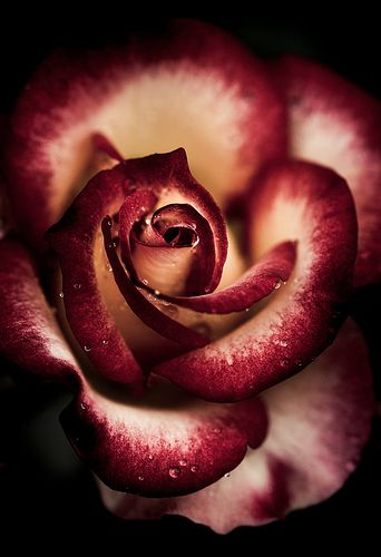 """""""What's in a name? That which we call a rose by any other name would smell as sweet."""" ~William Shakespeare/Romeo and Juliet:"""