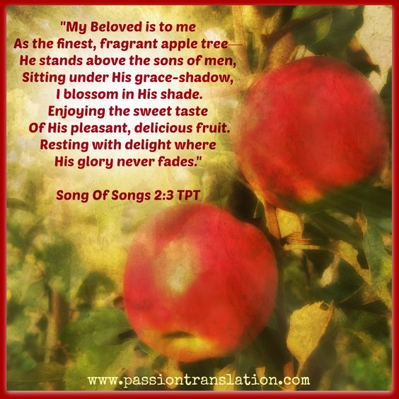 Song of Songs 2:3 TPT The Passion Translation: