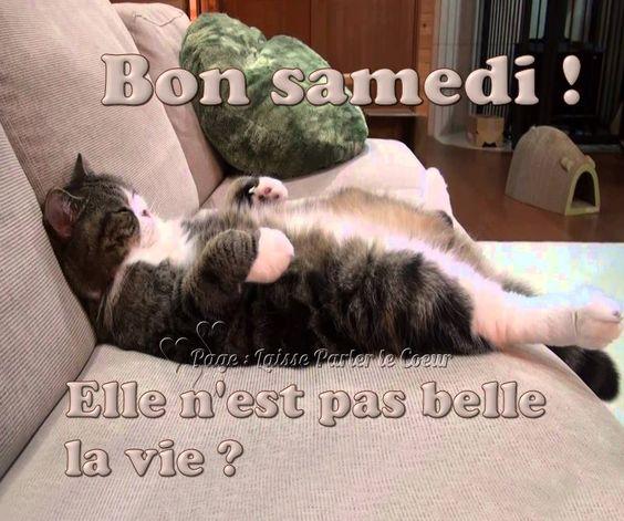 Bon samedi ! Elle n'est pas belle la vie ? #bonnesoiree chat canape drole flemme repos humour marrant