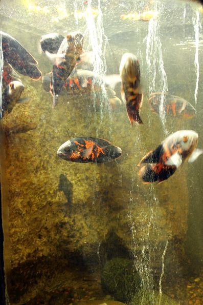 peixes-aquario-parque-lage
