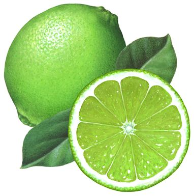 Whole lime with a cut half lime straight on view and leaves: