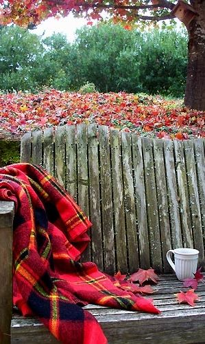 Fresh air, the scent of falling leaves, a blanket + a cup of coffee. Morning perfection.