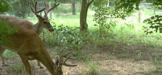 What a beautiful pair of deer!