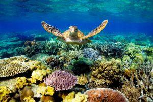 #54 Great Barrier Reef, Australia