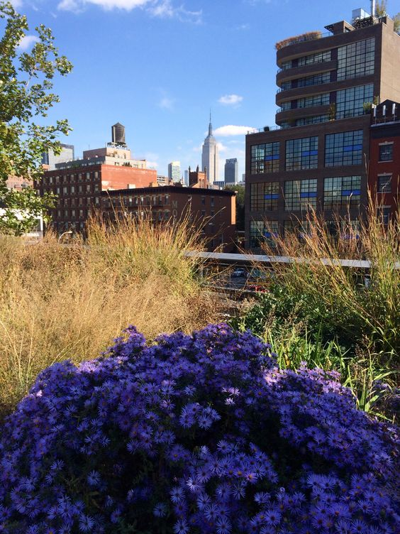 Fall flowers & the Empire State Building from The High Line- Chelsea-NYC, NY