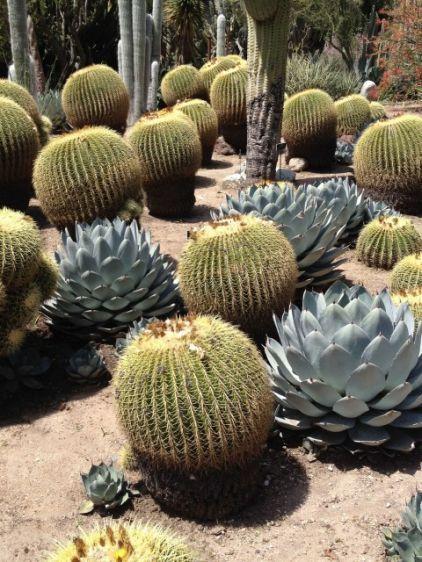 mediterranean landscape Huntington Desert Garden, Agave: