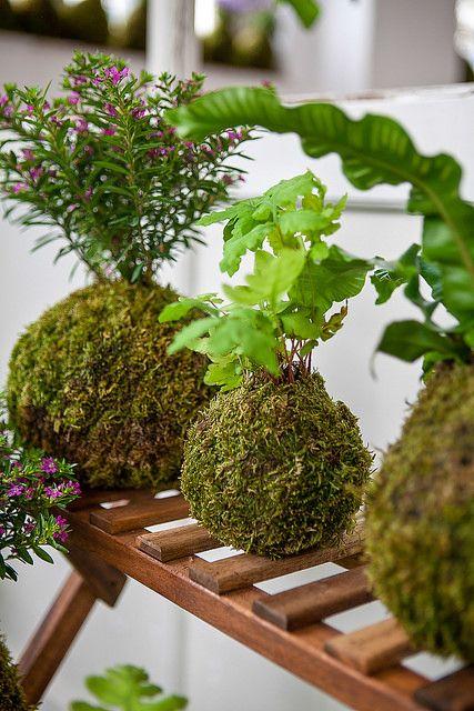 Bonsai on pinterest - Cultivo del bonsai ...